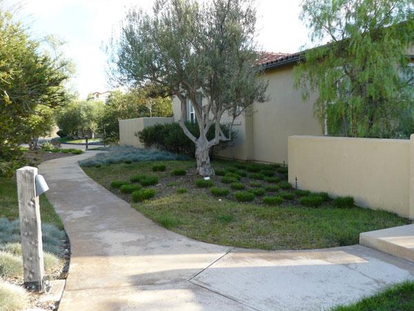 Frontyard03
